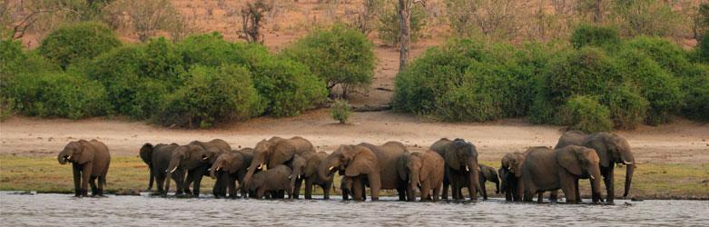 Botswana-Chobe