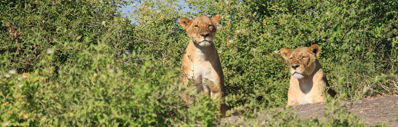 Chobe National Park Entrance Fees
